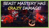 BEAST MASTERY HAS CRAZY DAMAGE! | Beast Mastery Hunter PvP | WoW Shadowlands 9.0.5